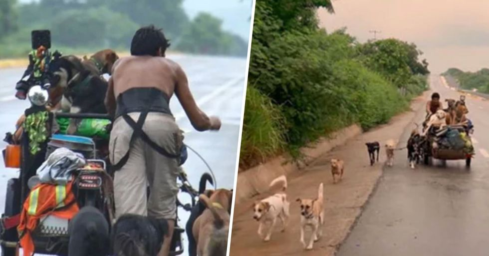 Man Walks Thousands of Miles to Collect Stray Dogs and Rehome Them in Mexico