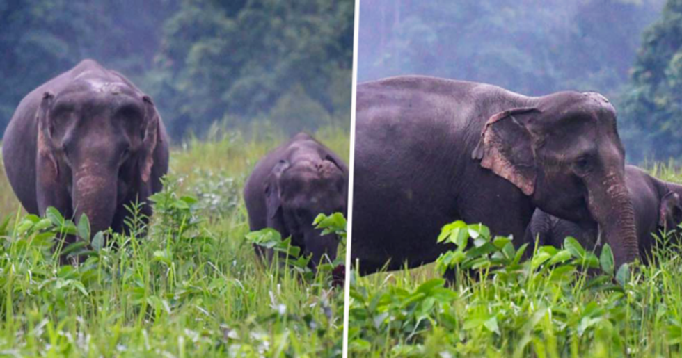Elephants Roam Freely in Thai National Park as Lockdown Keeps Tourists Away