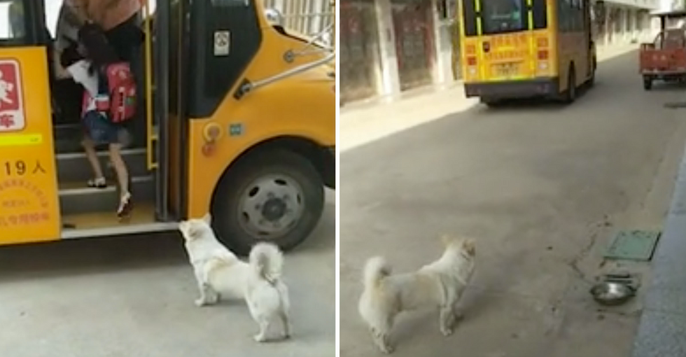 Dog Waits With His Young Owner for Her School Bus Every Day to Make Sure She Gets on Safely