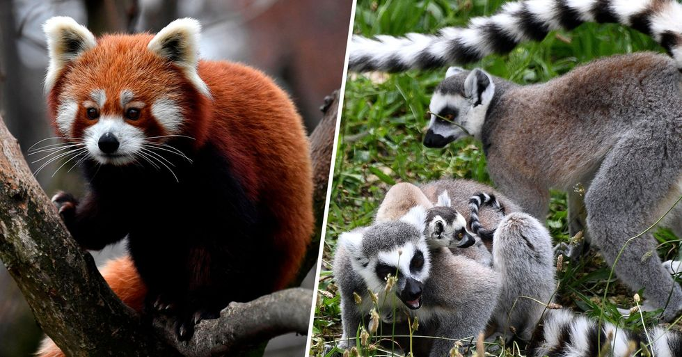 Zoo Forced to Close Finds Homes for All Its Animals After Euthanasia Fears