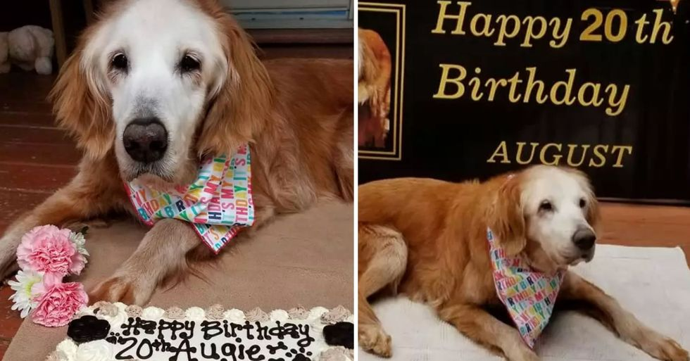 Dog Becomes World's Oldest Golden Retriever After Celebrating 20th Birthday