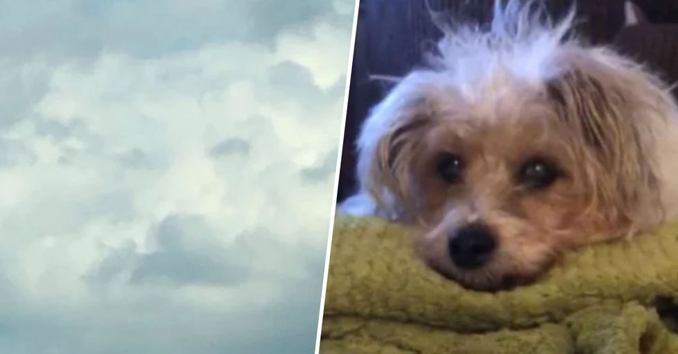 Mourning Owner Sees Dog's Face in the Sky Hours After She Died