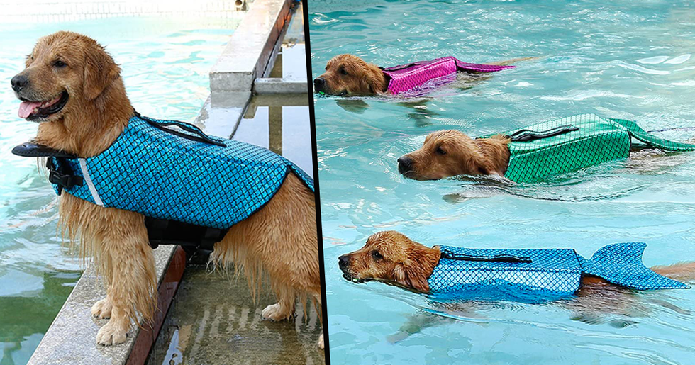 You Can Now Buy a Mermaid Vest for Your Dog to Turn Them Into a Majestic Sea Creature