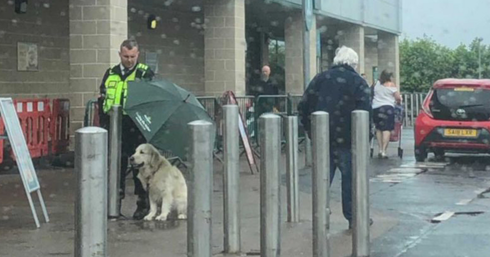 Grocery Store Security Guard Praised for Protecting Dog From Downpour of Rain