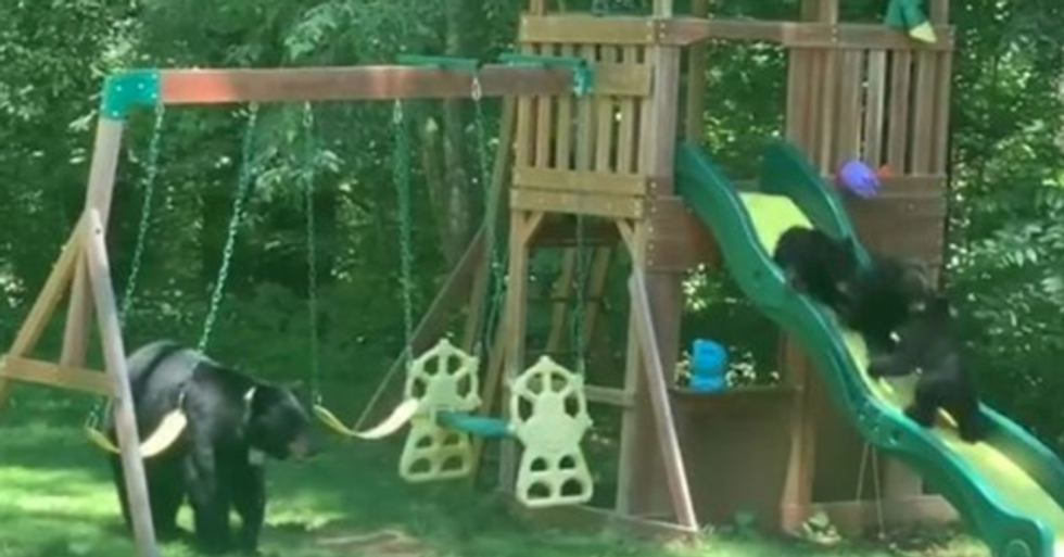 Mom Bear Takes Her Cute Cubs to Children's Playgrounds to Have the Time of Their Lives