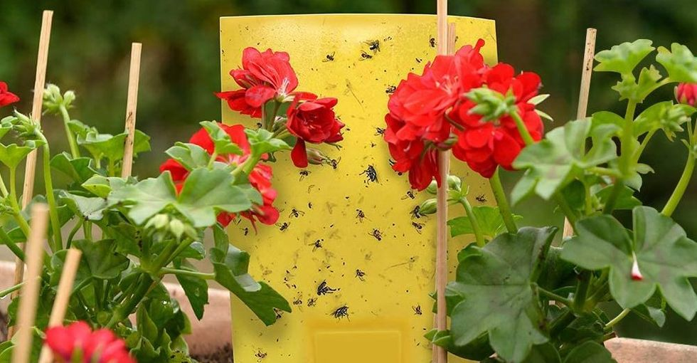 The 10 Best Fly Traps for Indoor and Outdoor Use This Summer (2020)
