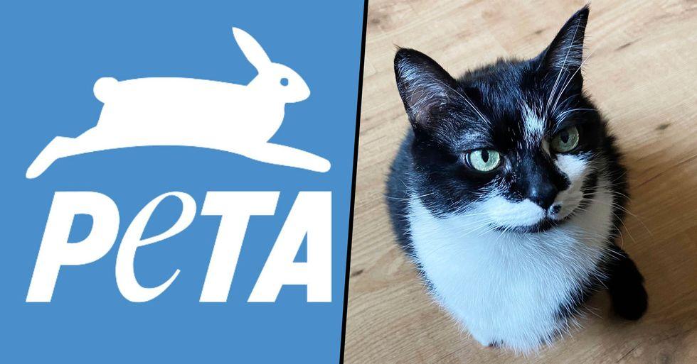 PETA Slammed for 'Sick Joke' After Posting Graphic Image of a Cat With 'Offensive' Caption