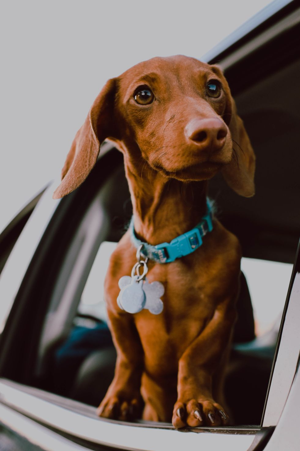 5 Reasons Why Everyone Should Love Dachshunds