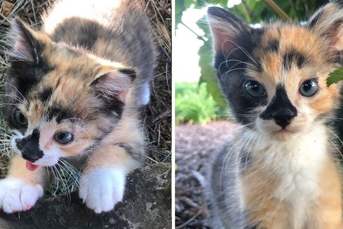 Family Took in Scrappy Kitten and Helped Her Blossom into Adventurous Cat