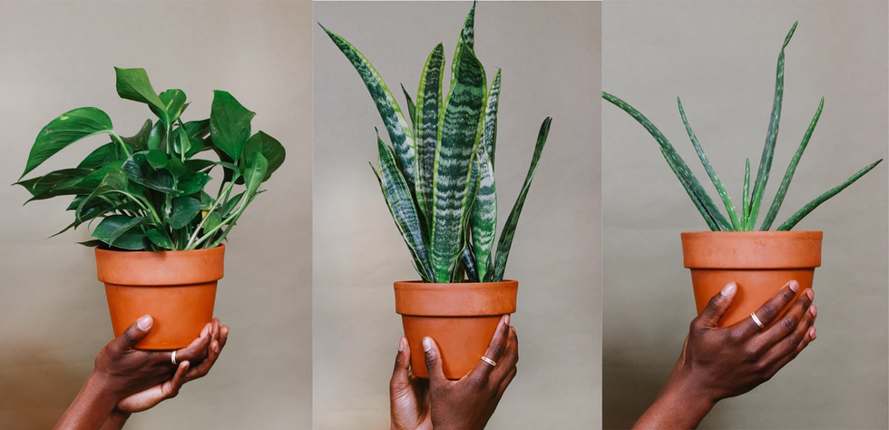 These 16 Black-Owned Plant Shops Will Deliver Right To Your Door — Say 'Aloe' To Your Inner Plant Parent