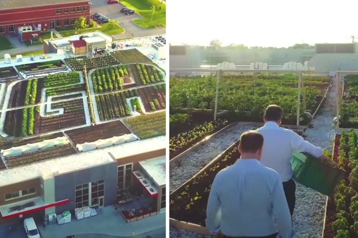 Canadian IGA grocery store sells organic produce and honey from its own rooftop garden