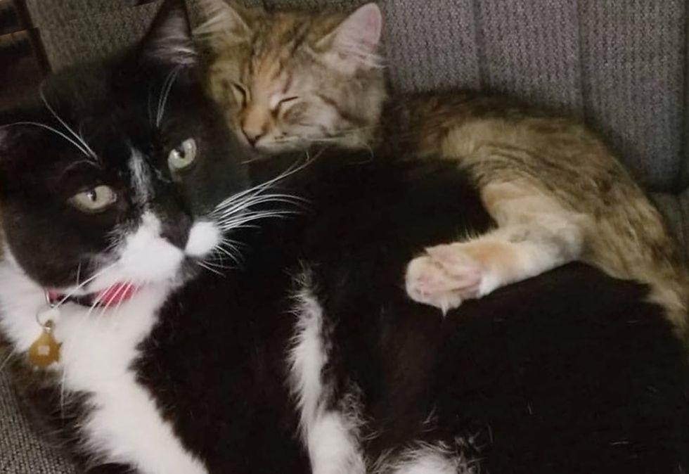 cuddles, cat and kitten, best friends