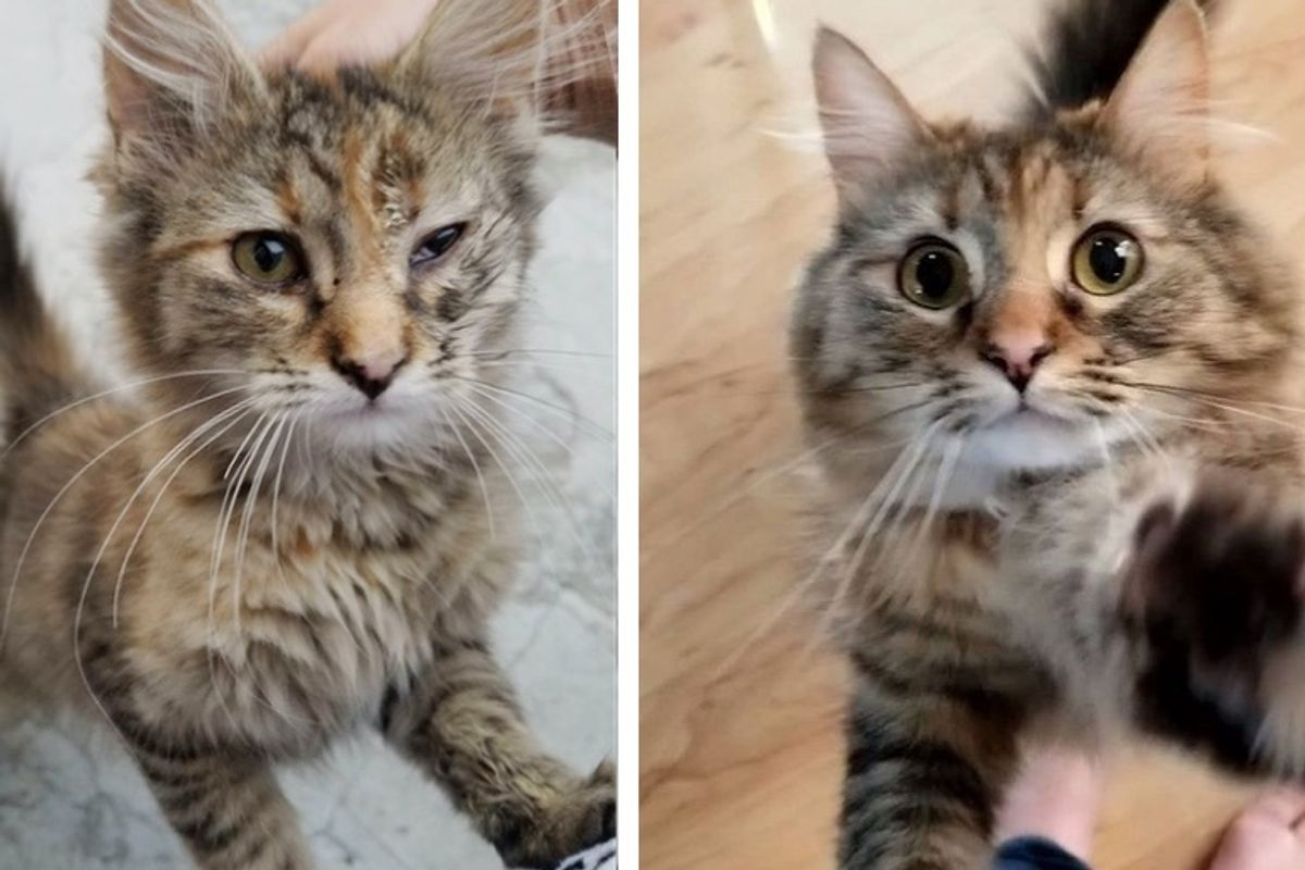 Stray Kitten Turns into Happy Fluffy Cat After Family Found Her in Parking Lot