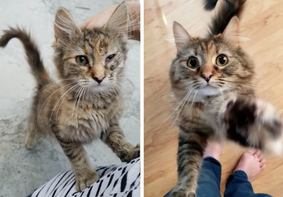 then and now, cat, stray kitten