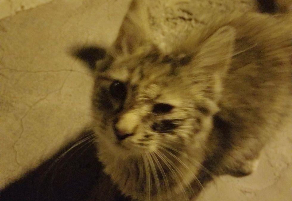 stray kitten, street