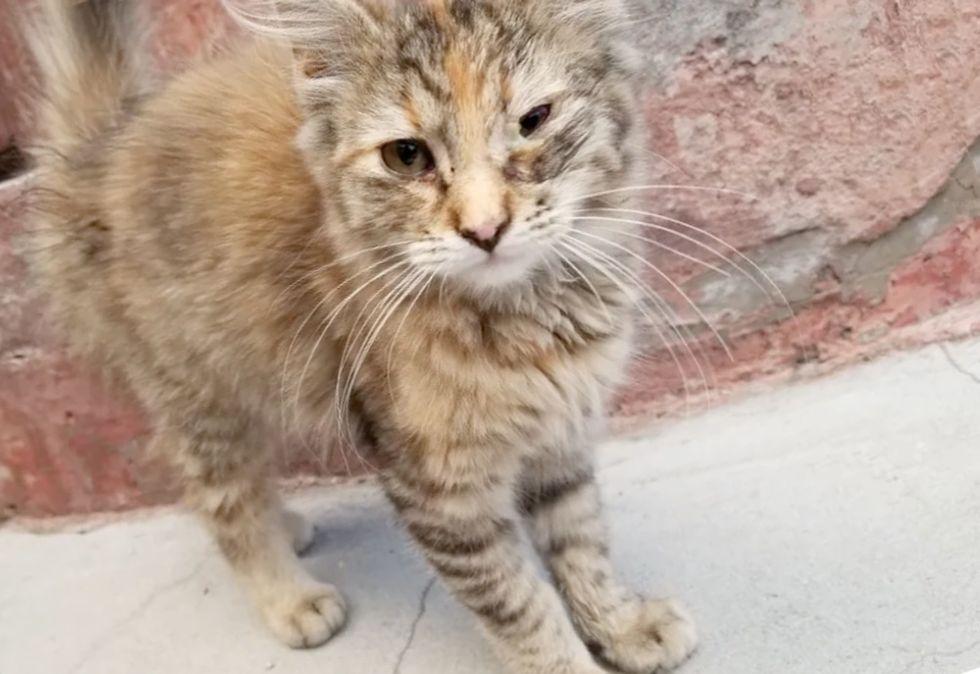 stray kitten, torbie cat