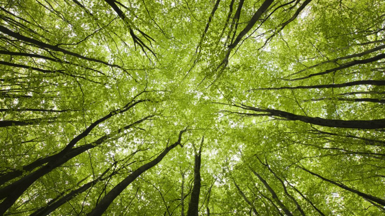 "Discover How Trees Secretly Talk to Each Other Using the ""Wood Wide Web"""