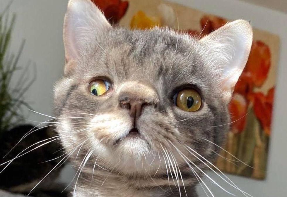 cute, kitten, unusual, perfect, face