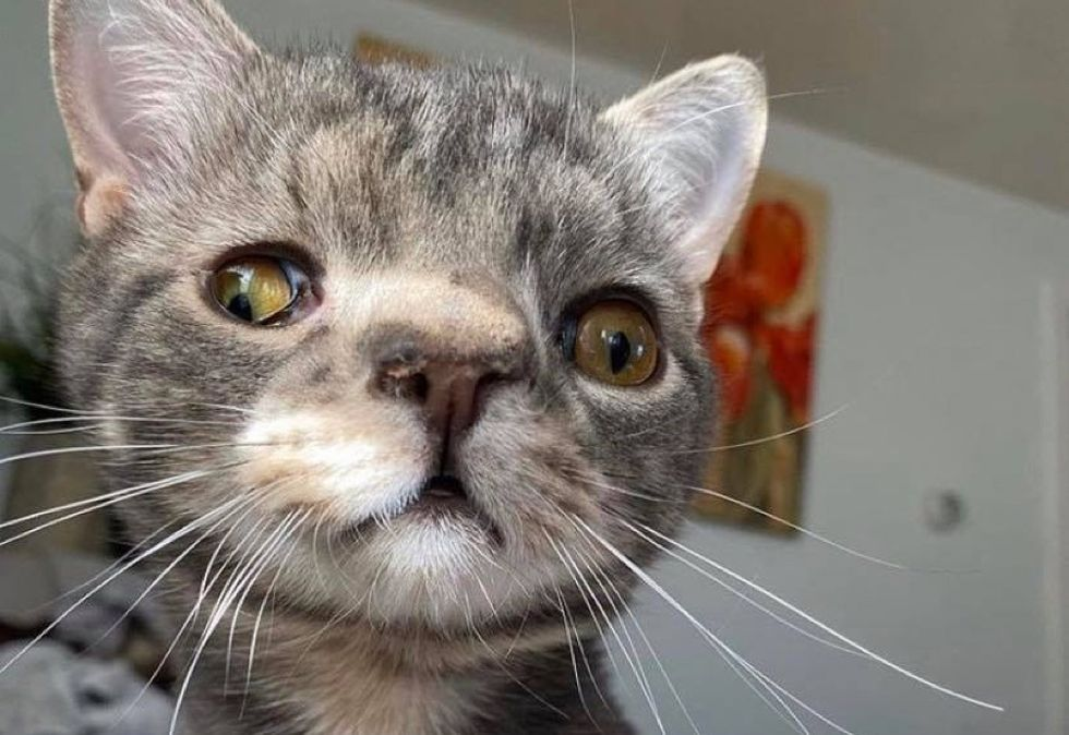 cat, unusual, perfect, face, genetic condition