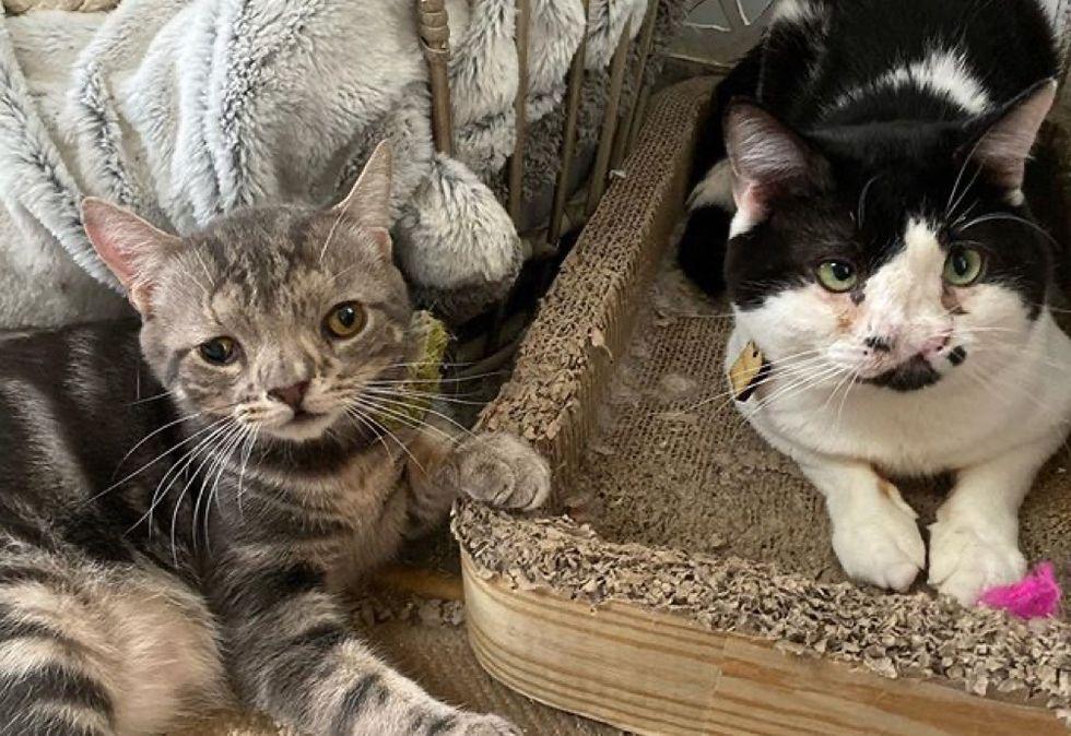 special, cats, cute