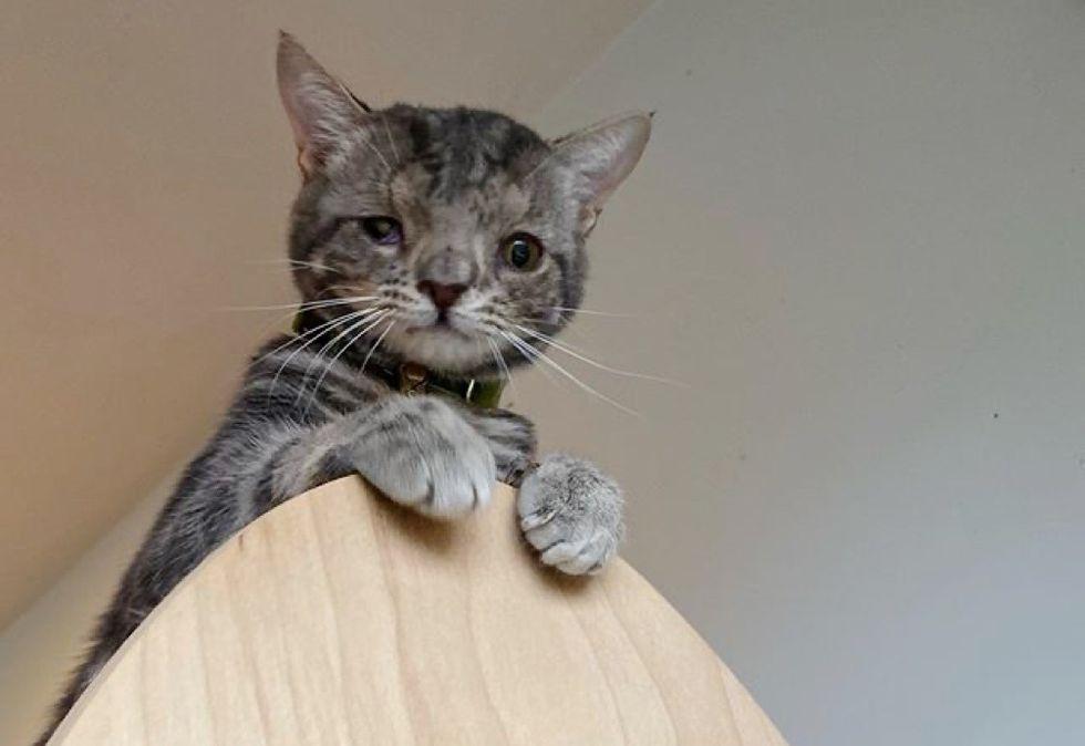 cat, cute face