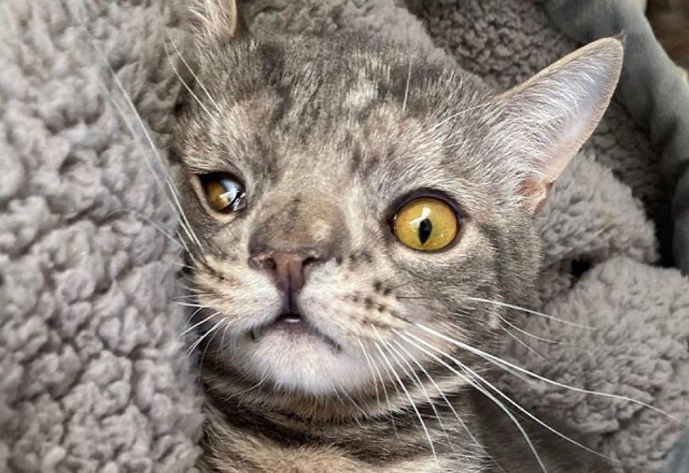 cat, unusual, perfect, face, chromosome