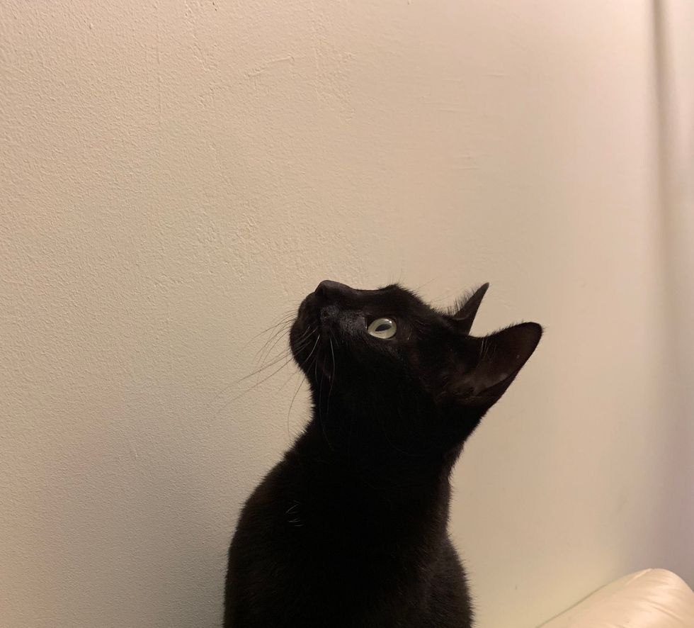 Meet My Cat: Shadow Who Lives In New York City