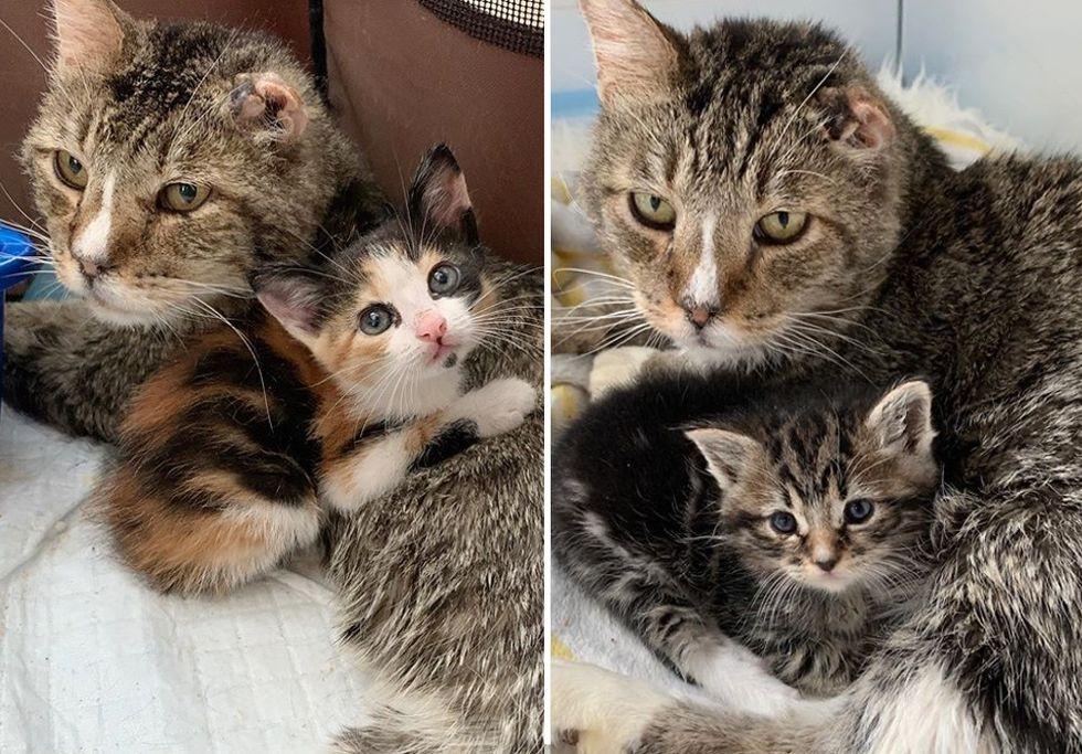 cat, kittens, cuddles