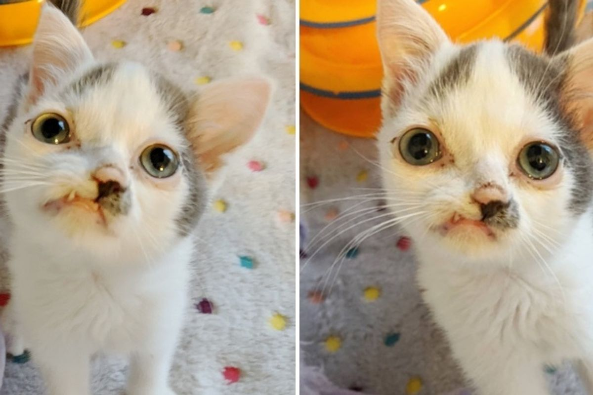 Pint-sized Picasso Kitten is So Happy to Receive the Care He Needs to Thrive