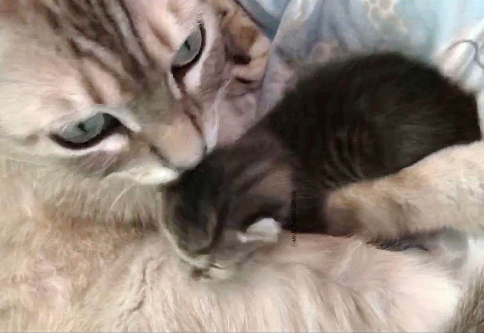 cat, kiss, kitten