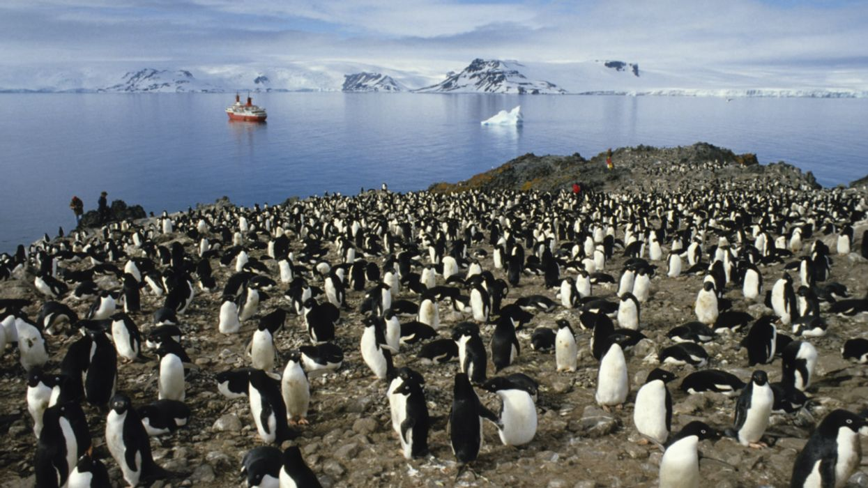 Microplastics Found in Antarctica's Food Chain for First Time