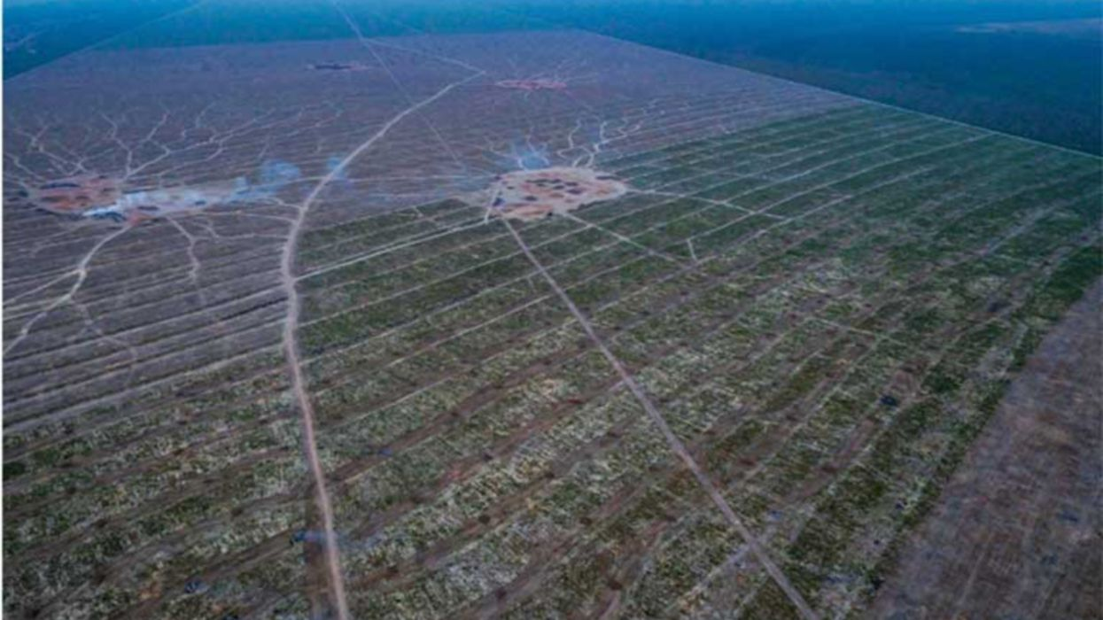 New Study Finds China and EU Soy Imports Are Increasing Brazil's Deforestation