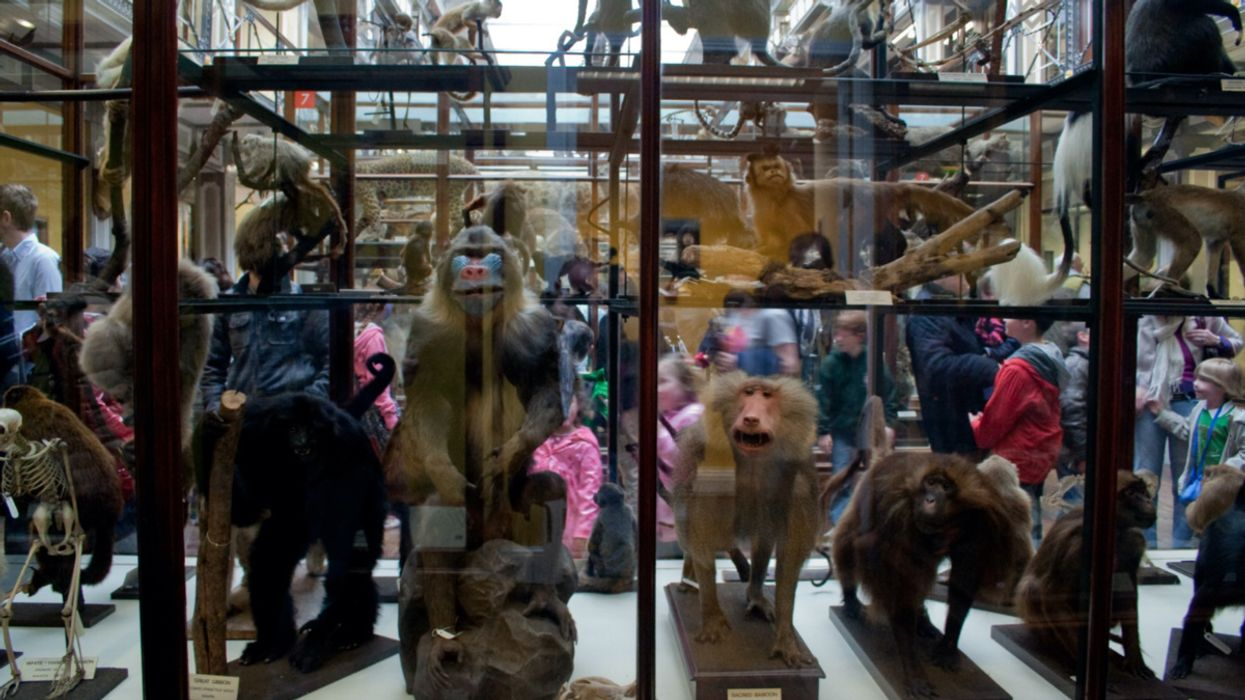Museums Preserve Clues That Can Help Scientists Predict and Analyze Future Pandemics