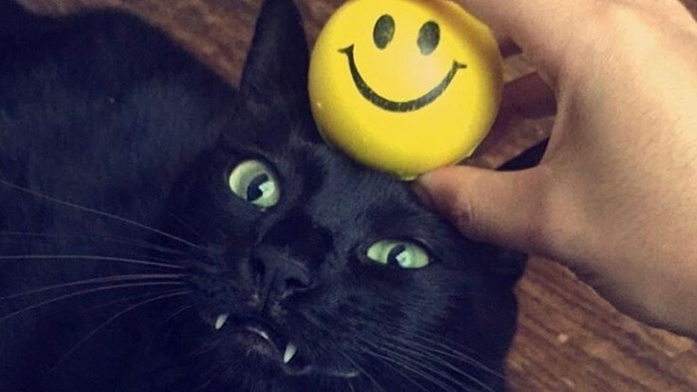 Meet My Cat: Blackstar Who Lives In The Heart Of Texas