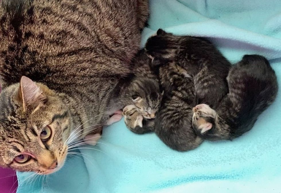 cat mom, kittens, proud