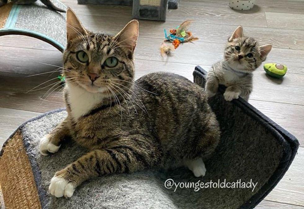 tabby cat, mom, kitten, mini me