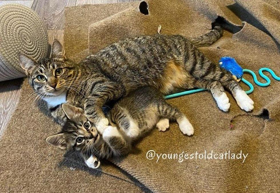 cat mom, tabby, hug, cuddle, kitten