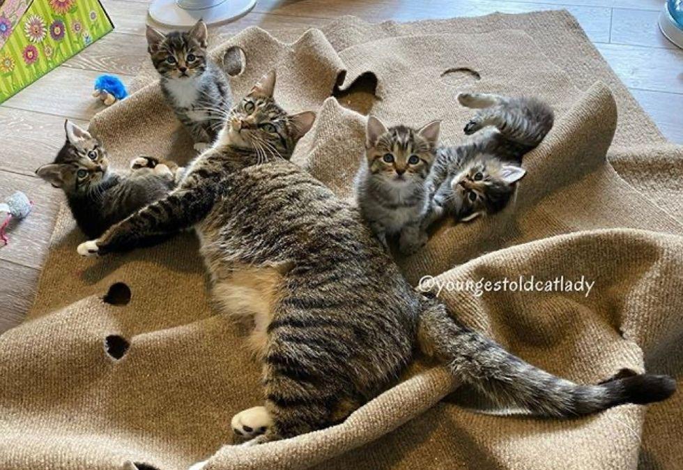 cat mom, kittens, tabby