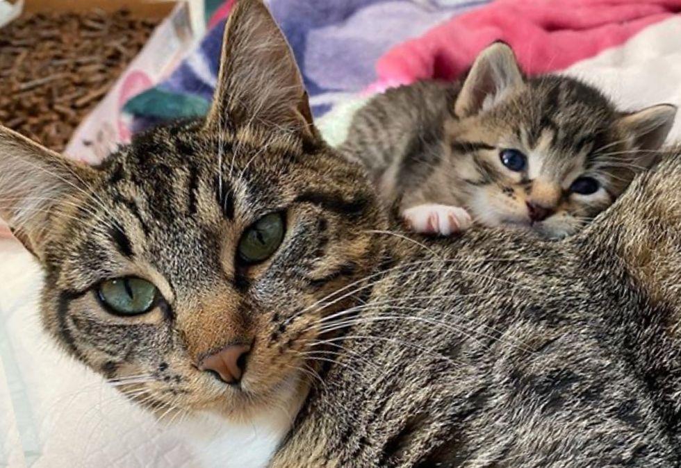 cat mom, kitten, mini me
