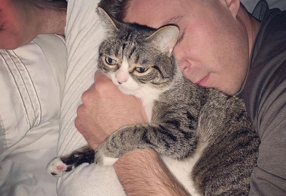 cuddle, hug, tabby cat, kitten
