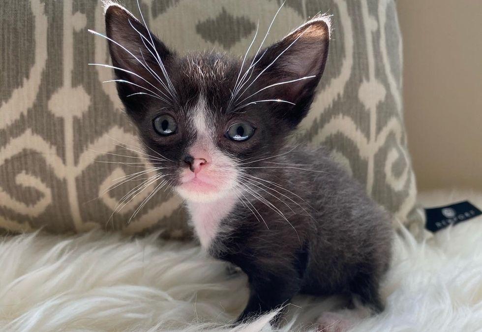 ears, whiskers, kitten, tiny