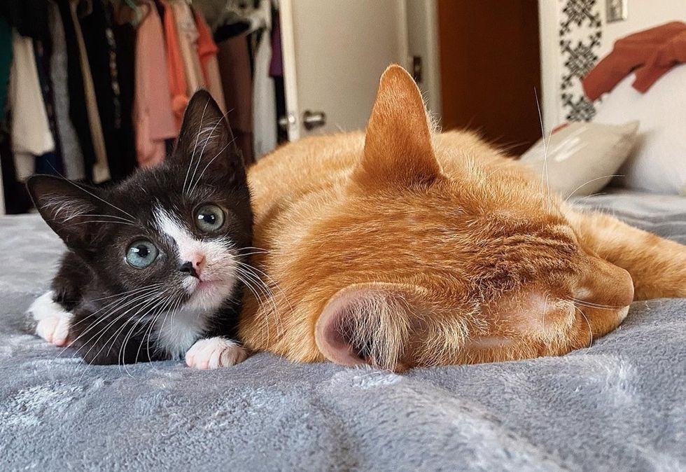 kitten, tiny, ginger cat, snuggle