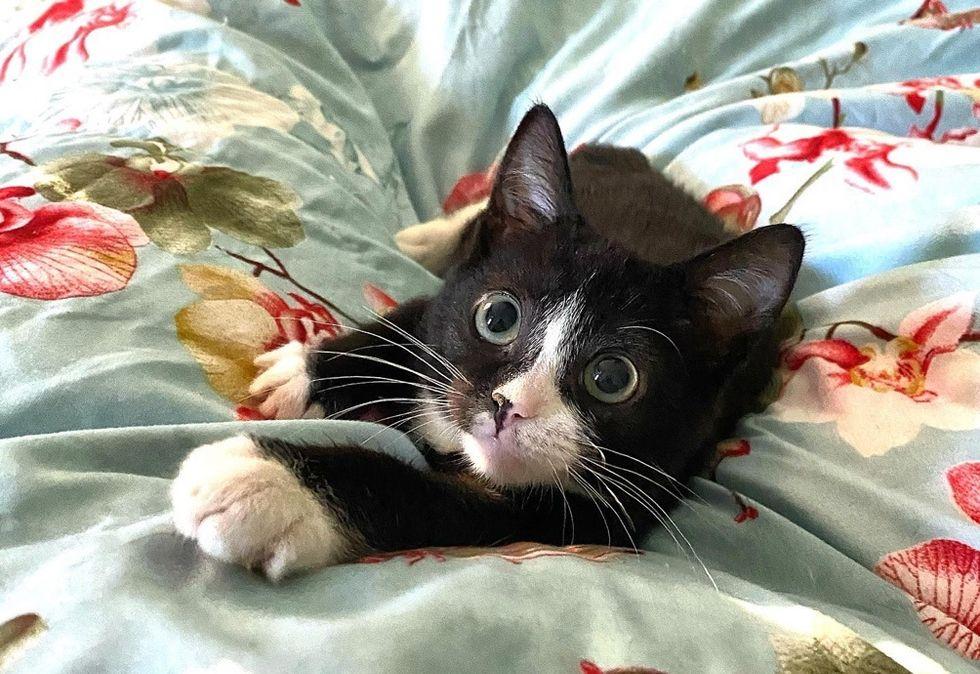 cute cat, tuxedo
