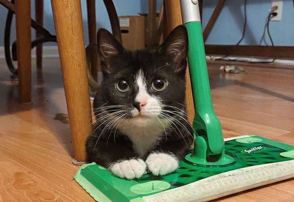 cute cat, tuxedo, kitten, paws