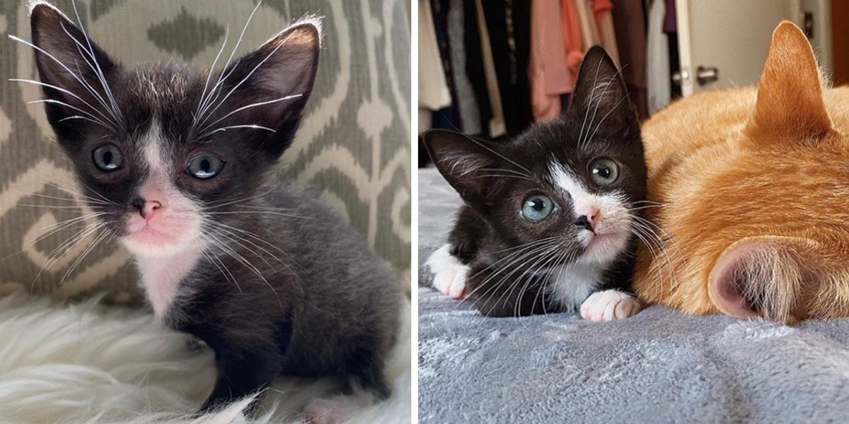Pint-sized Kitten Blossoms into Beautiful Cat and Finds Dream Home