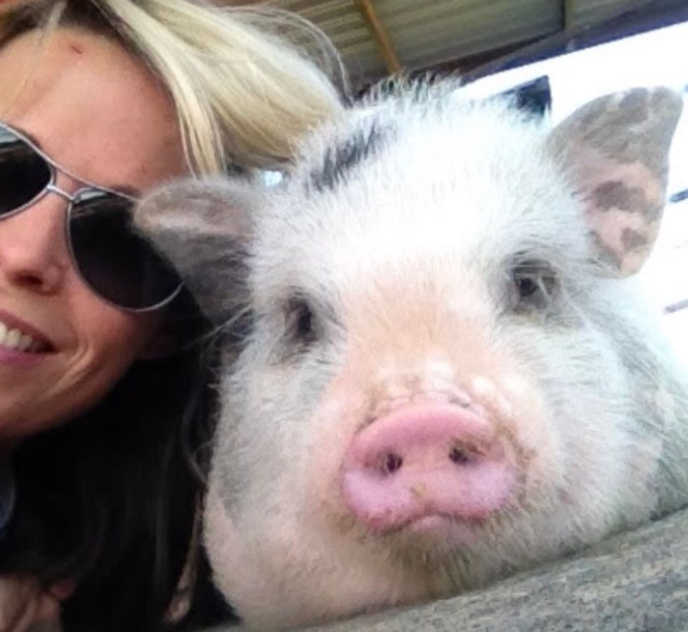 5 Reasons Raising A Pig Is The Best Thing You Can Do