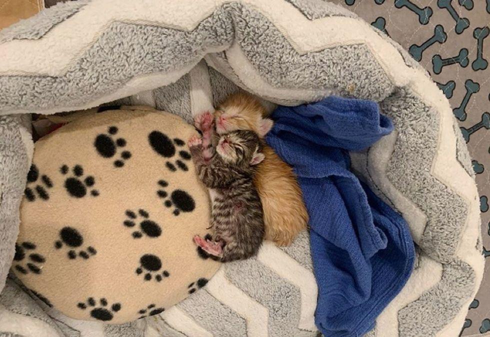 cuddles, sleepy kittens, tiny