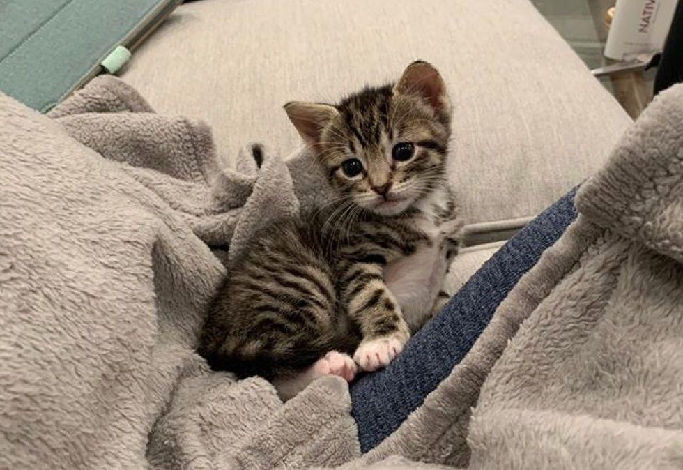tabby kitten, cute cat