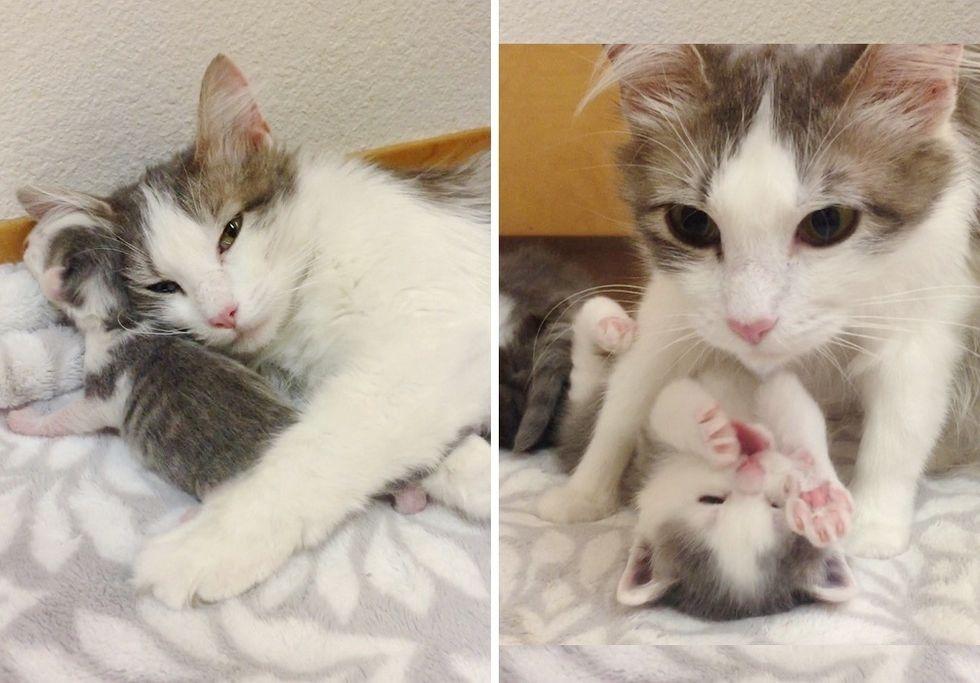 cat mom, cuddle, kitten