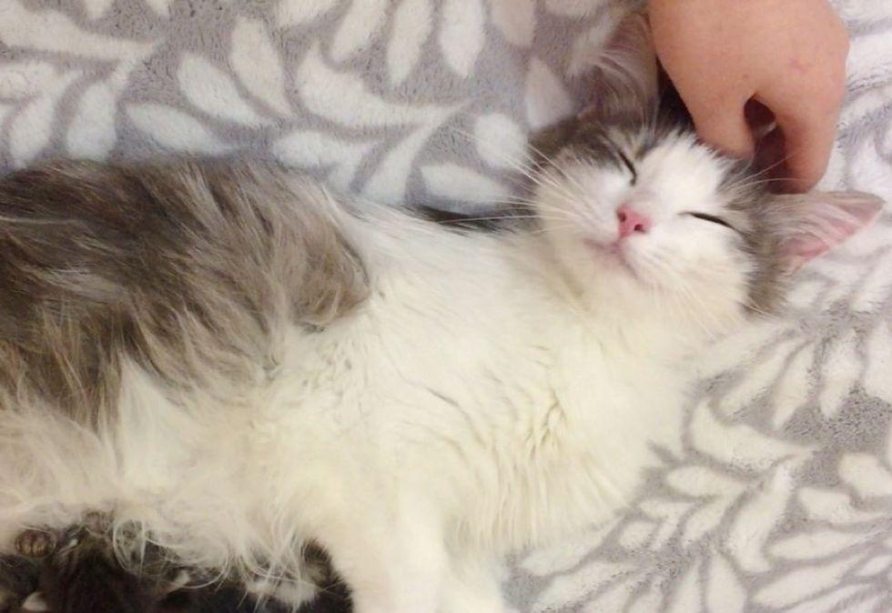 happy, cat, pets